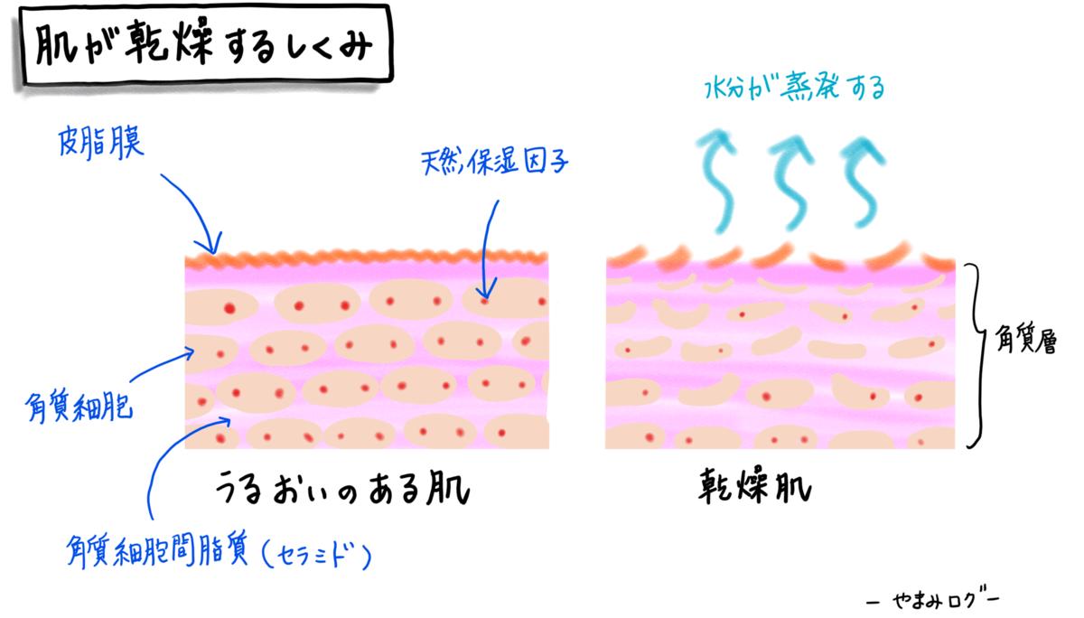 セラミドは角質層で水分を抱え込む性質があります