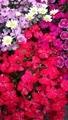 赤くて小さい花