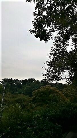 f:id:yamamomokobaru:20181011175748j:plain