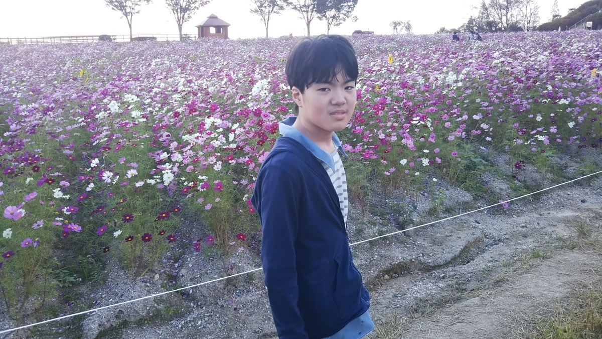 f:id:yamamomokobaru:20200905174022j:plain