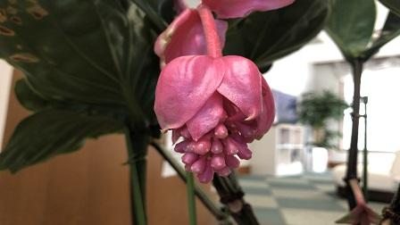 f:id:yamamoto-urology:20180515095147j:plain