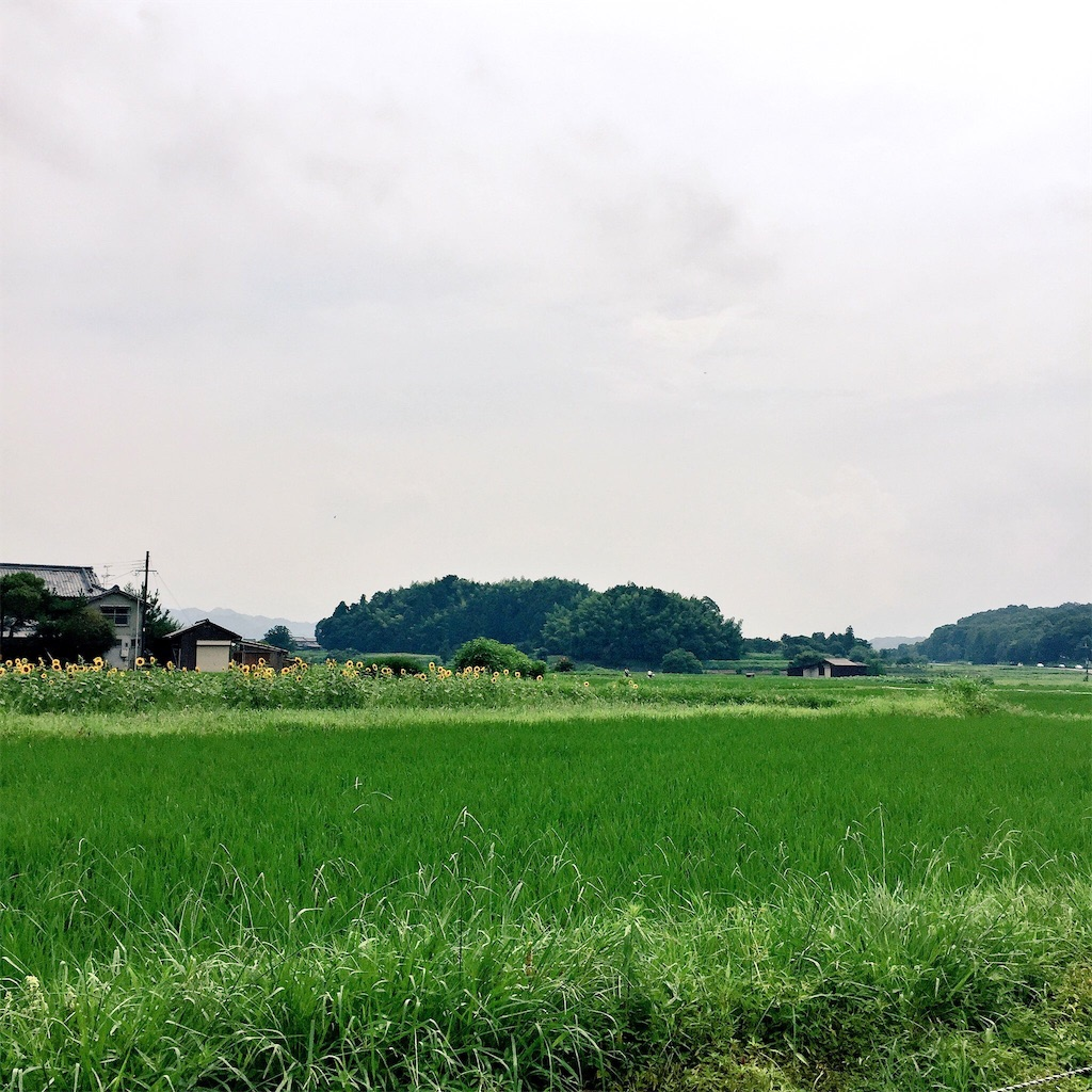 f:id:yamamotoari:20160805121624j:image