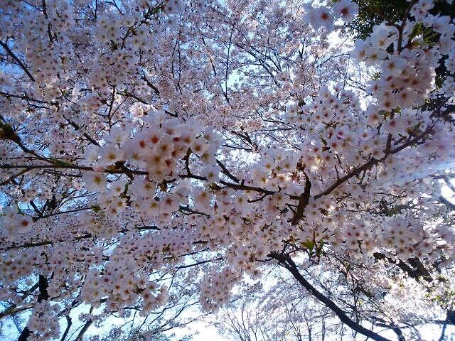 f:id:yamamotomakiko:20170409212738j:plain
