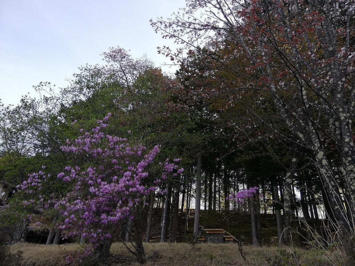 f:id:yamanashiiori:20190506220812j:plain
