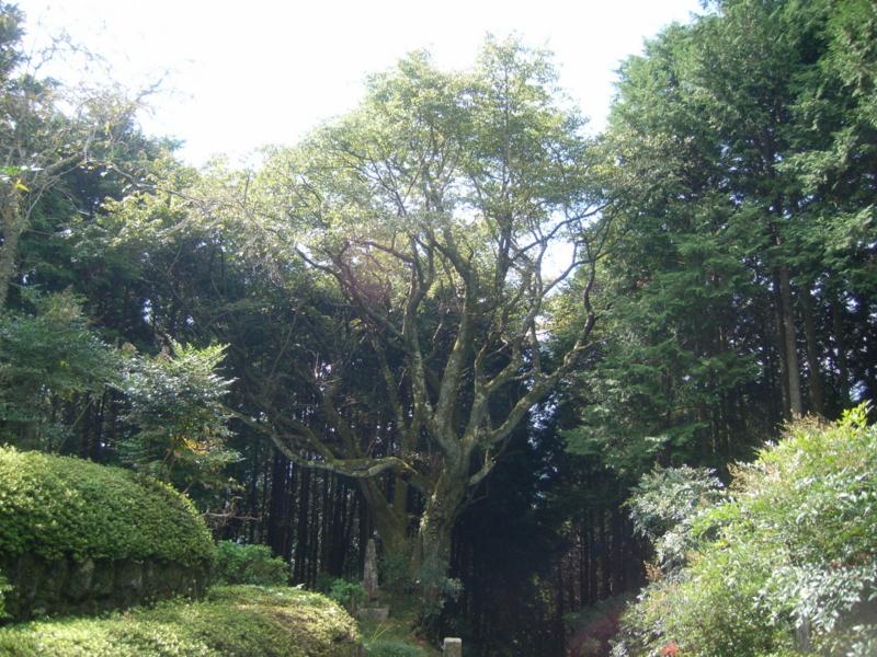 f:id:yamanashimidorisupport:20101003103824j:image