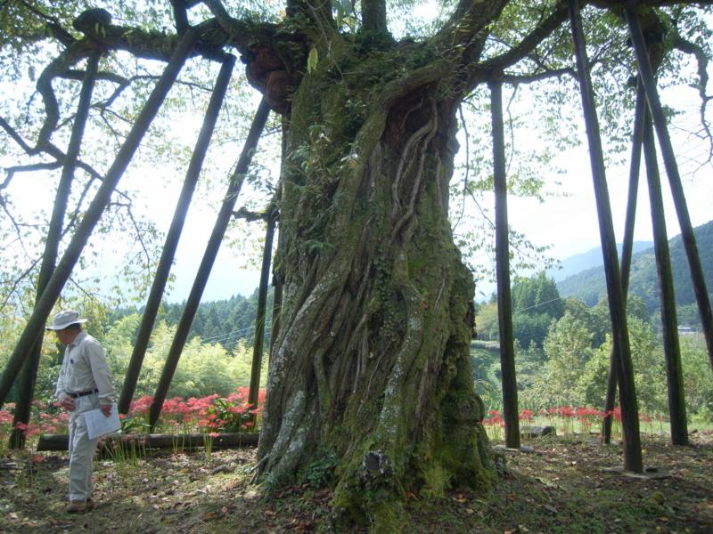 f:id:yamanashimidorisupport:20101003112644j:image