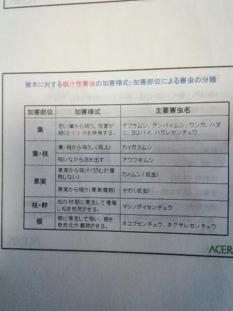 f:id:yamanashimidorisupport:20190620084742j:image