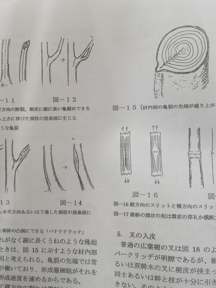 f:id:yamanashimidorisupport:20201124110400j:plain