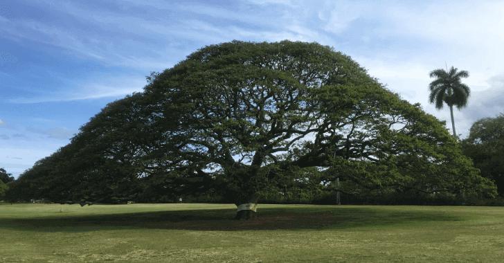 この木何の木~