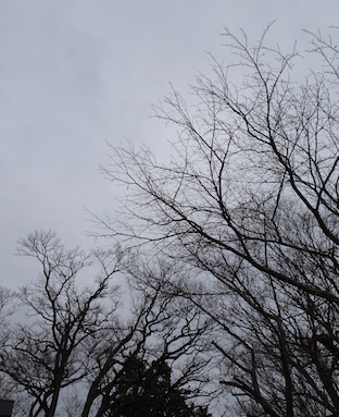f:id:yamanoueunderground:20210120114956j:plain