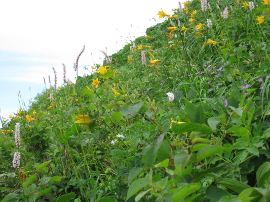f:id:yamanouta:20090720110632j:image