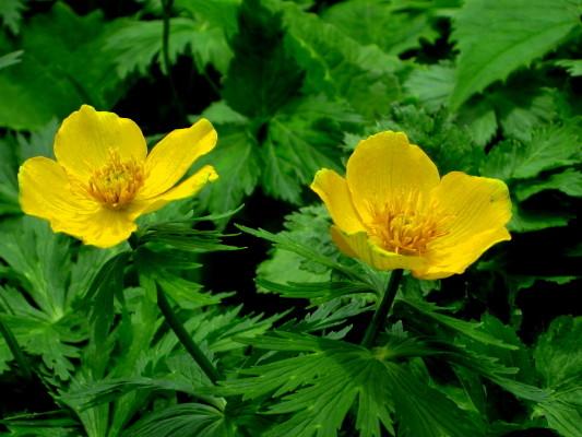 f:id:yamanouta:20090720112010j:image