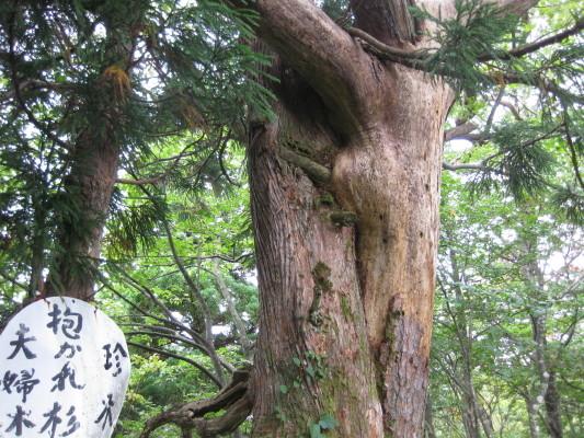 f:id:yamanouta:20090923101257j:image