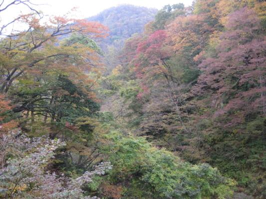 f:id:yamanouta:20091101123501j:image