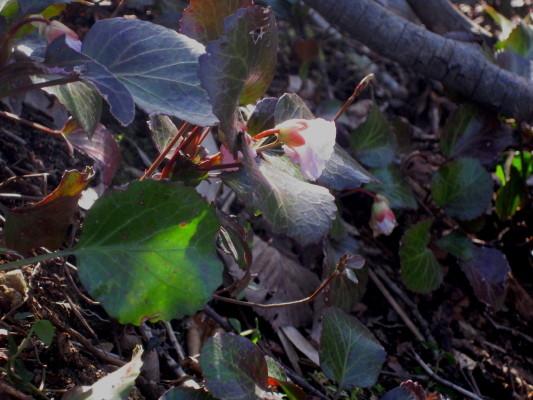 f:id:yamanouta:20100404075012j:image