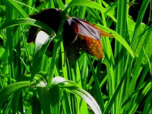 f:id:yamanouta:20100725080057j:image