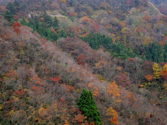 f:id:yamanouta:20101114130345j:image