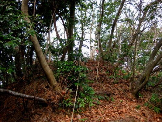 f:id:yamanouta:20110320100132j:image