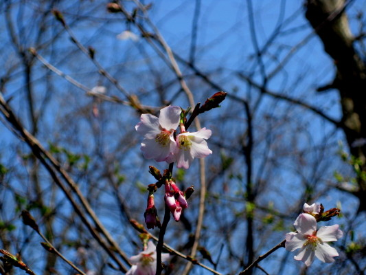 f:id:yamanouta:20110410113527j:image