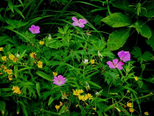 f:id:yamanouta:20110731200936j:image