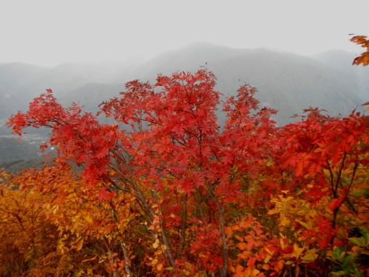 f:id:yamanouta:20111016173618j:image