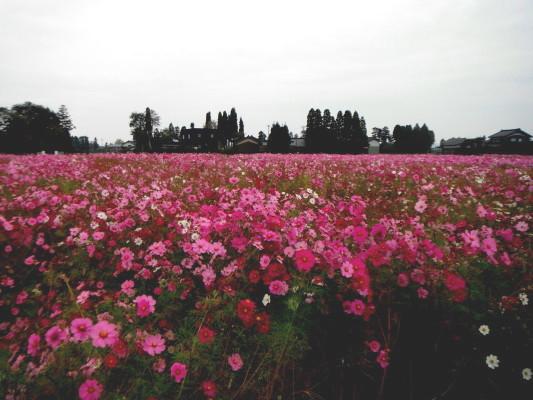 f:id:yamanouta:20111031060637j:image
