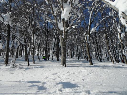 f:id:yamanouta:20120109175833j:image