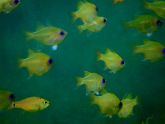 f:id:yamanouta:20120715155918j:image