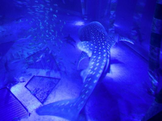 f:id:yamanouta:20120715155920j:image
