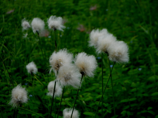 f:id:yamanouta:20120812172519j:image