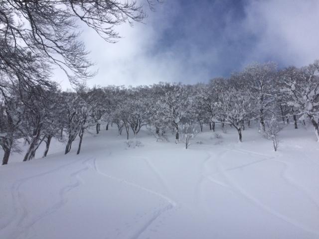 f:id:yamanouta:20170213135202j:image