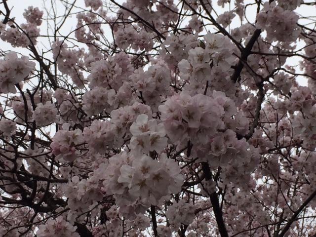 f:id:yamanouta:20170406100651j:image