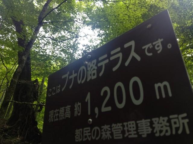 f:id:yamanoyu215:20200813103533j:plain