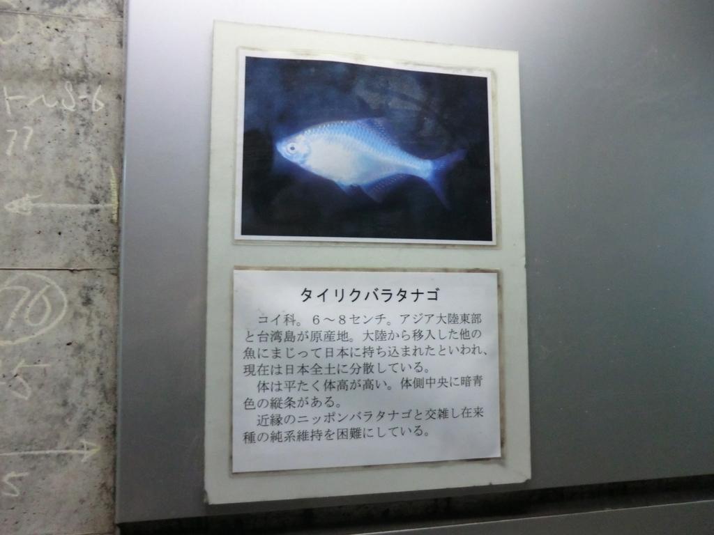 f:id:yamasaki1ma:20190216185644j:plain