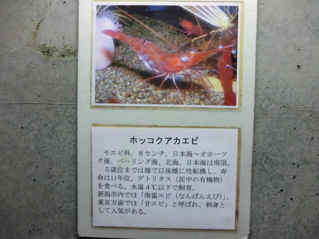f:id:yamasaki1ma:20190216185704j:plain