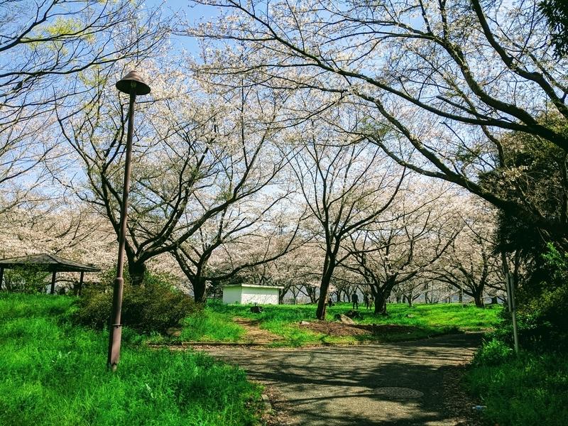 f:id:yamasakisabaro:20210323160241j:plain