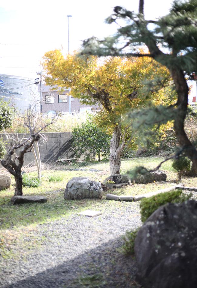 我が家に植わる紅葉の木十二月の様子