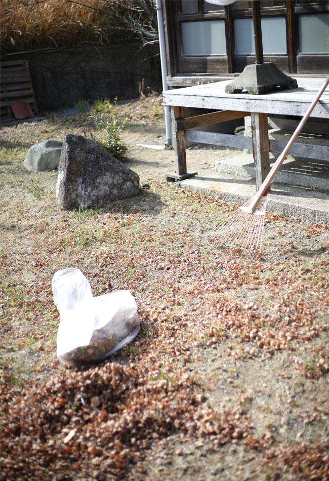 庭じゅうに落ちた落ち葉