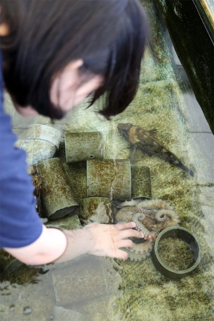 鳥羽水族館 タコに触れる