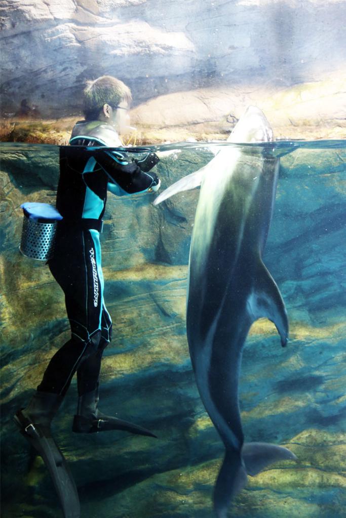 海遊館 イルカ