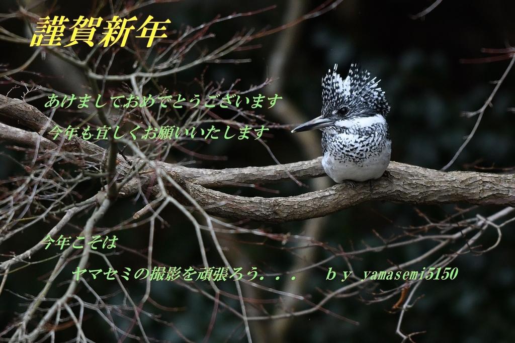 f:id:yamasemi5150:20190101075704j:plain