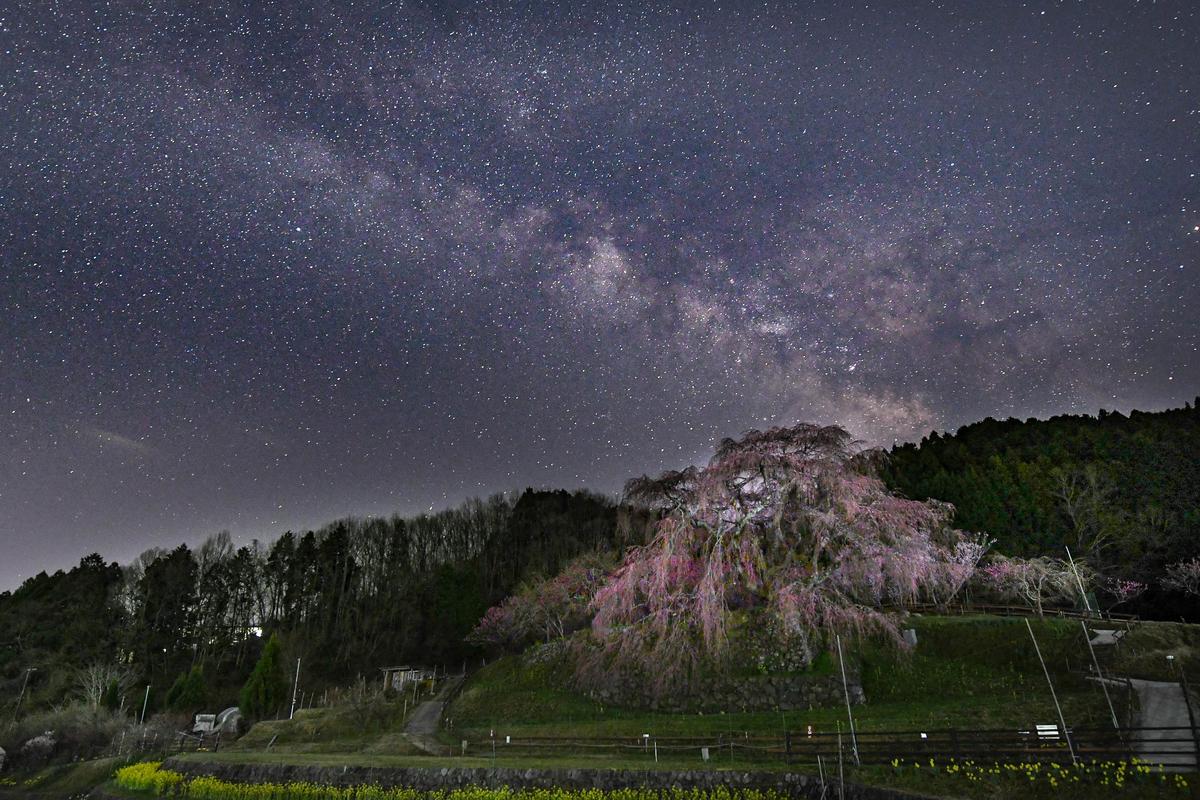 f:id:yamasemi5150:20200329201144j:plain