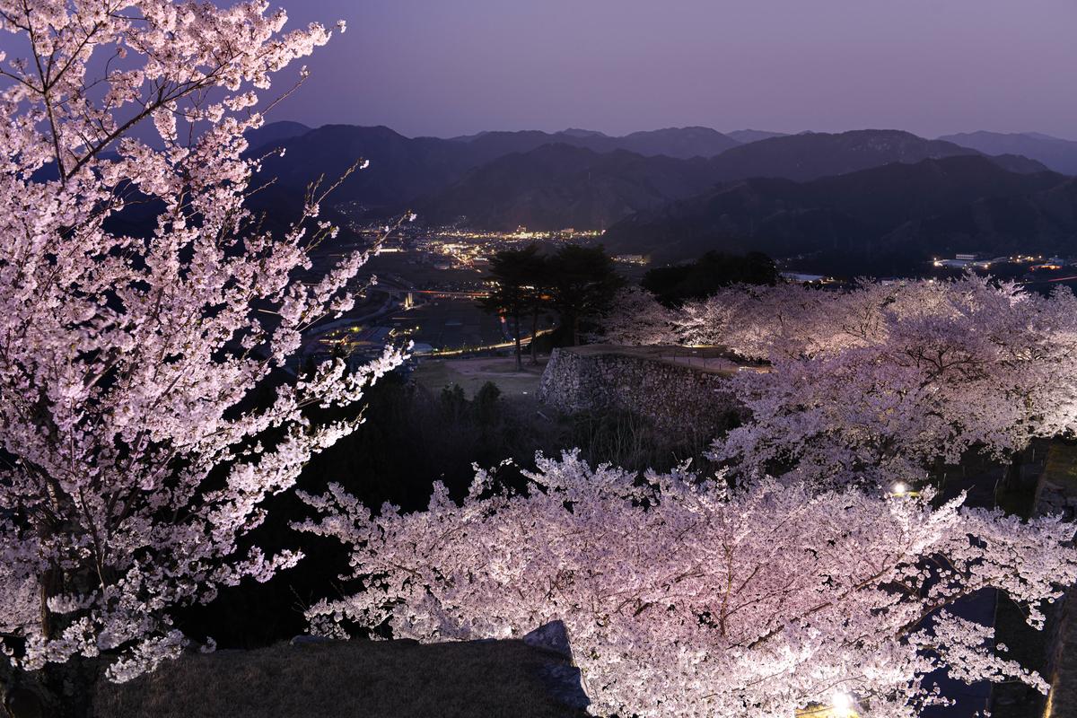 f:id:yamasemi5150:20200409221318j:plain