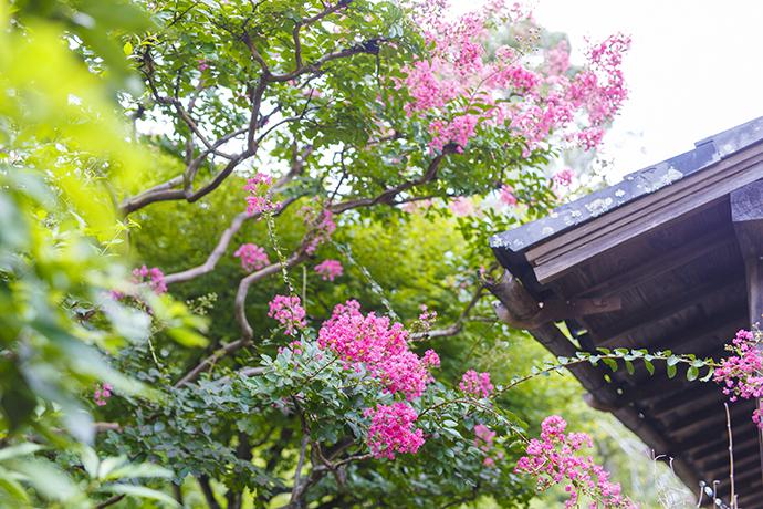 f:id:yamashita_m:20201201155159j:plain
