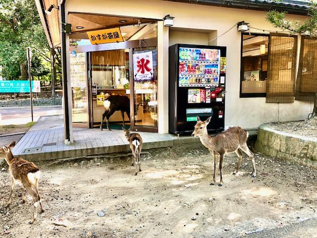 お店に入る鹿