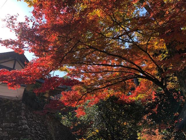 赤鳥居近くの紅葉