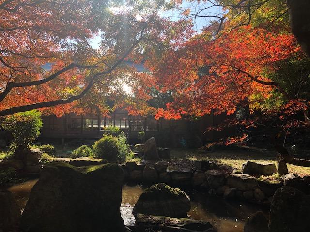 日吉会館の池