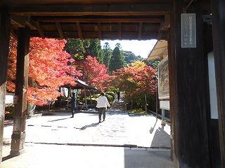 f:id:yamasiro2012:20161116202848j:plain