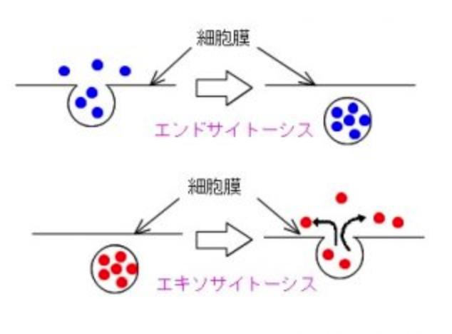 f:id:yamatatsu08:20180904094324p:plain