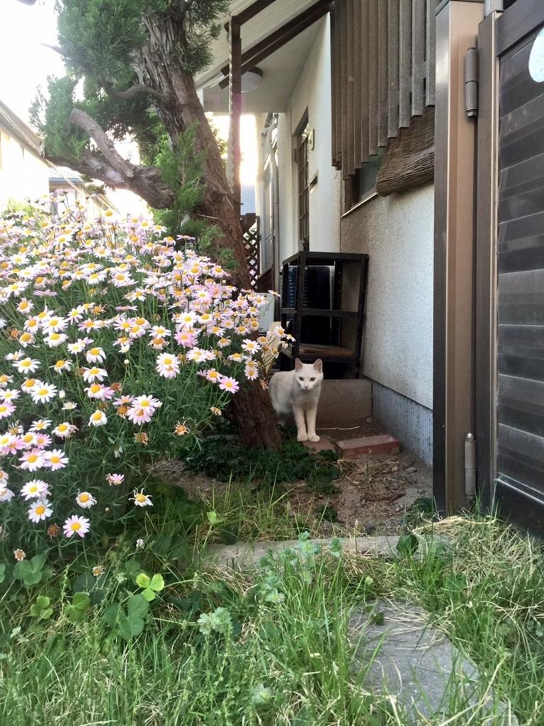 f:id:yamato-ashimoto:20170714224906j:plain